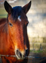 Free Beautiful Horse Looking Into Your Eyes Stock Images - 25605554