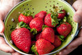 Free Hands Holding Colander Of Strawberries Royalty Free Stock Images - 25606949