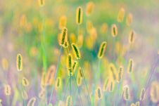 Free Fresh Grass On Meadow Royalty Free Stock Photos - 25603488