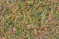Free Grass And Leaves Covered With Hoarfrost Royalty Free Stock Image - 25603566