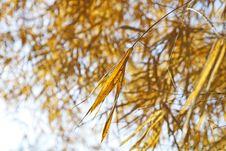 Bamboo Dry Royalty Free Stock Photos