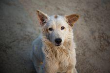Free The Dog Royalty Free Stock Photos - 25605498