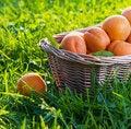 Free Apricots Royalty Free Stock Photo - 25614955