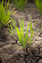 Free Green Grass And Dried Soil Royalty Free Stock Photos - 25616718