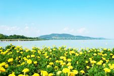 Free Beautiful Panorama To Lake Balaton With Yellow Flo Royalty Free Stock Photo - 25613535