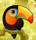 Free Toucan On The  Branch Stock Images - 25630524