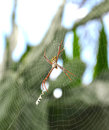 Free Spider Stock Images - 25636594