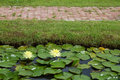 Free Yellow Lotus Pond With A Brick Red On The Grass. Royalty Free Stock Photos - 25638688