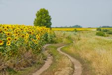 Free Rural Landscape Stock Photography - 25631612