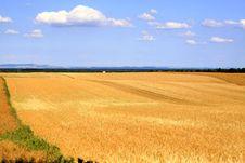 Free Barley Field Royalty Free Stock Photos - 25632928