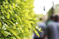 People Walking Past Green Plant Leaves Royalty Free Stock Images