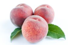 Free Three Pink Peach And Green Leaves Royalty Free Stock Photos - 25639208