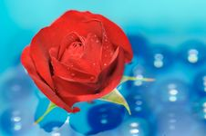 Free Beautiful Red Rose With Dew Drops On Water Stock Images - 25639904