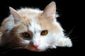 Free Home Cat Royalty Free Stock Photography - 25642817