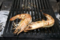 Free Grilled Shrimp Stock Photography - 25645712