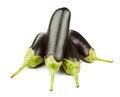 Free Eggplants Stock Photo - 25649860