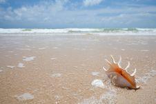 Free Seashell On The Sand Of Seashore Stock Images - 25640074