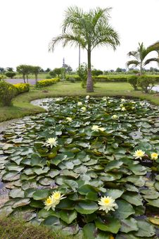 Free Yellow Water Lily Pond With Palm Trees. Royalty Free Stock Images - 25640109