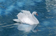 Free White Swan Stock Photos - 25641093