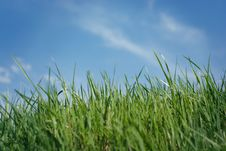 Free Green Grass Royalty Free Stock Image - 25642146