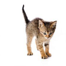 Scared Striped Kitten Stock Photos