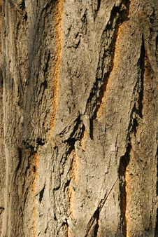 Free Bark Texture Stock Photos - 25644273