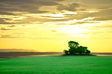 Green Island With Golden Sky Stock Images