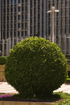 Free Round Tree In Front Of Building Facade Royalty Free Stock Images - 25647479