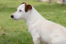 Free White Puppy Royalty Free Stock Photos - 25648958