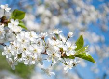 Free White Flowers In The Sky Royalty Free Stock Images - 25648989