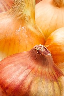 Colorful Onions Royalty Free Stock Photo
