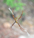 Free Spider Stock Images - 25651364
