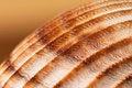 Free Seashell Stock Photos - 25657383