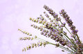 Free Lavender Flowers Bokeh Stock Images - 25657984