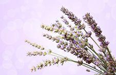 Free Lavender Flowers Bokeh Stock Images - 25657984