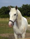 Free White Horse Stock Images - 25663734