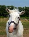 Free White Horse Stock Photo - 25663740