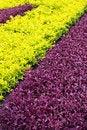 Free Beautiful Park Garden Stock Photos - 25668773