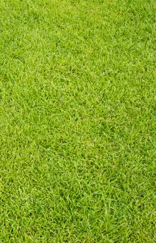 Free Grass Background Stock Photography - 25660782