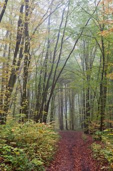 Free Cloudy Autumn Landscape Stock Photo - 25662630