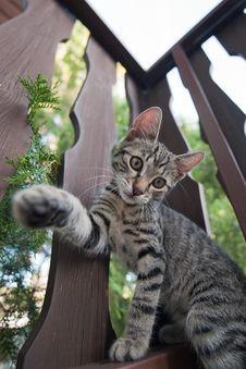 Free Domestic Cat Royalty Free Stock Photo - 25663465
