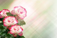 Free Roses Royalty Free Stock Images - 25663649