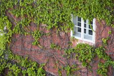 Free Overgrown Window Royalty Free Stock Image - 25663746