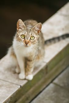 Free Cat Staring At You Royalty Free Stock Image - 25665756