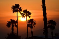 Free Sunset Sillouetted Palm Trees Royalty Free Stock Images - 25666329