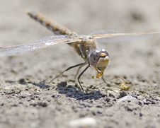 Free Dragonfly Eating Stock Photo - 25668380