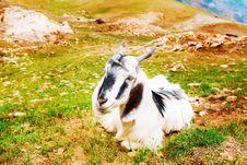 Free Goat Royalty Free Stock Image - 25671976