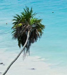 Free Beach Palm Stock Image - 25679031