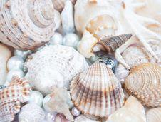 Free Seashell Background Royalty Free Stock Photo - 25682005