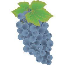 Free Grape Fruit Vector Stock Photos - 25686373